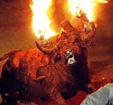 bulls-on-fire-in-spain