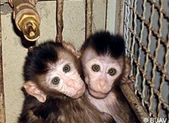 cambodian-monkeys-2