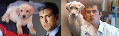 war-hero-dog