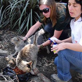 At Chile S Ground Zero We See Animals Everywhere